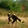 Photo #3 - Umbreon