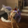 Photo #3 - Unicorn Dog