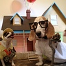 Photo #1 - Diesel as Russell (left) Maximus as Carl (right)