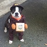 Photo #2 - Walter the UPS Dog