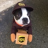 Photo #3 - Walter the UPS Dog