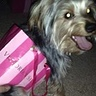 Photo #2 - Me and my yorkie (Sophie) in our matching Victoria's Secret bags