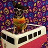 Photo #1 - Pixie with her shades on in her vw bus!