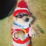 Photo #3 - Waldo's Dog Woof