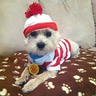 Photo #4 - Waldo's Dog Woof