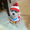 Photo #5 - Waldo's Dog Woof