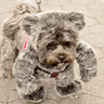Photo #2 - Bugsy the walking teddy bear - out for a walk