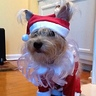 Photo #2 - Walter as Santa