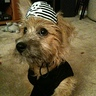 Photo #1 - Cutest Pirate dog