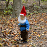 Photo #2 - Wandering Gnome
