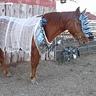 Photo #2 - War Horse