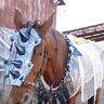 Photo #3 - War Horse