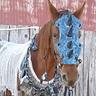 Photo #1 - War Horse