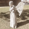 Photo #6 - Weeping Angel-6