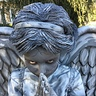 Photo #4 - Weeping Angel