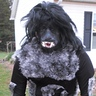 Photo #1 - werewolf ready for the hunt