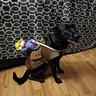 Photo #1 - Bronco Puppy