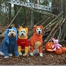 Photo #2 - Winnie the Pooh and Friends- after the HunnyHunt