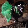 Photo #2 - Oreo our little Witch
