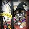 Photo #4 - Happy Halloween from Molly
