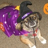 Photo #2 - Halloween is all around Molly