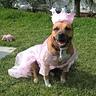 Photo #1 - Wizard of Oz Glinda