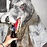 Photo #1 - Wolfman