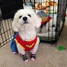 Photo #2 - Wonder Women and Superman Dogs