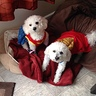 Photo #1 - Wonder Women and Superman Dogs