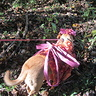 Photo #1 - Woodland Fairy Dog