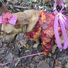 Photo #2 - Woodland Fairy Dog