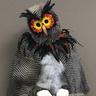 Photo #1 - Woodland Owl 1