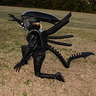 Photo #7 - Xenomorph Alien
