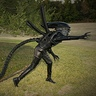 Photo #2 - Xenomorph attack!