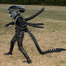Photo #1 - Xenomorph Stalking!