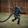Photo #4 - Little Sister Gracie Xenomorph