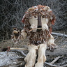 Photo #1 - Yarn Lion