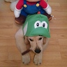 Photo #3 - Yoshi and Mario 3