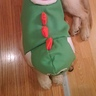 Photo #5 - Yoshi back view