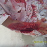 Photo #3 - his fake wounds