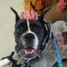 Photo #2 - Zombie Dog
