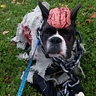 Photo #3 - Zombie Dog