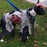Photo #4 - Zombie Dog
