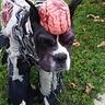 Photo #5 - Zombie Dog