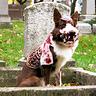 Photo #1 - Zombie Dog
