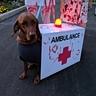 Photo #3 - Dog Roxie as a Zombie Ambulance