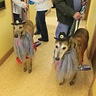 Photo #1 - The boys at there vet's costume contest