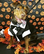 007 James Bond Dog Homemade Costume