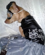 50 Shades of Grey Dog Homemade Costume