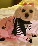 50's Poodle Skirt Dog Homemade Costume